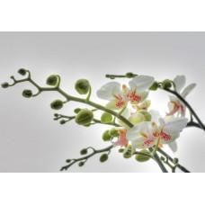1-608 Orchidee