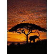 4-501 African Sunset