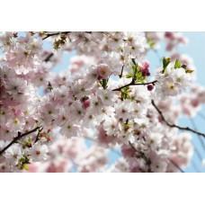 8-507 Spring